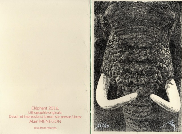 elephant-2016
