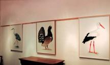 Héron - grand tétras et cigogne exposés grandeur nature